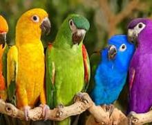 Παπαγαλάκια