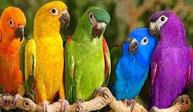 Πρωινά παπαγαλάκια